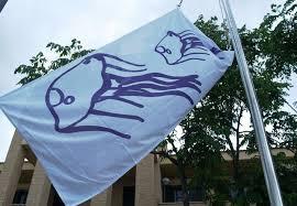 bandera medusas