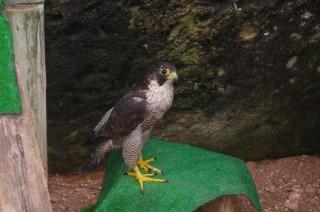 Centre Recuperació Fauna Silvestre.