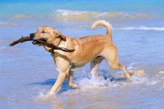 Fotos-de-perros-jugando-5