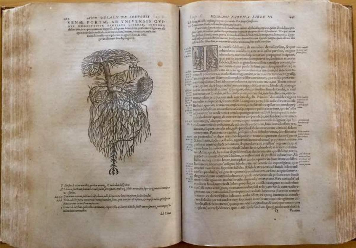 Maó muestra uno de los primeros libros impresos sobre la anatomía ...