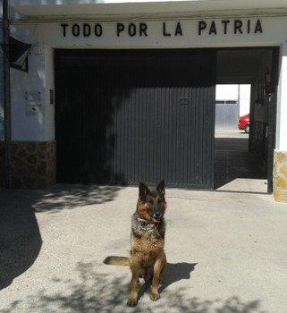 Dingo, en una imagen de la Guardia Civil.