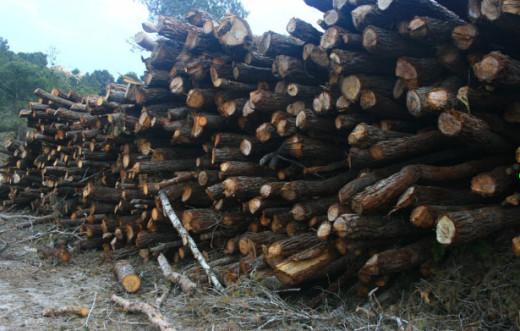 pinos cortados