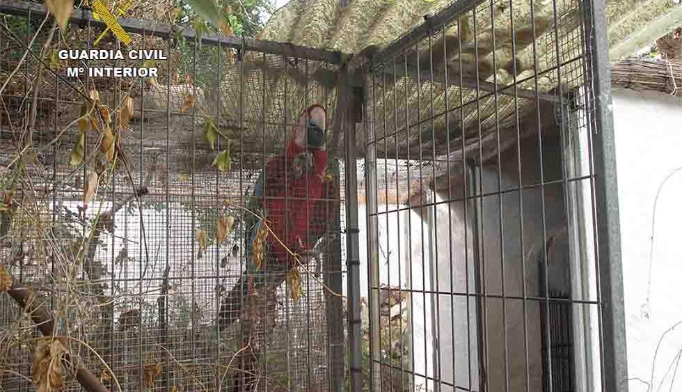 El Seprona decomisa 18 especies protegidas en una finca de Sant LLuís