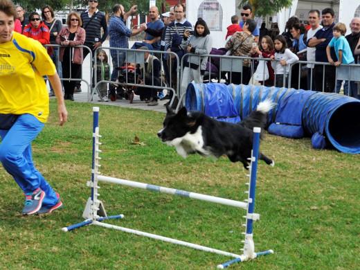 (Fotos) La gran fiesta de las mascotas