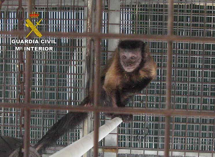 20161230-seprona-inspeccion-nucleo-zoologico2