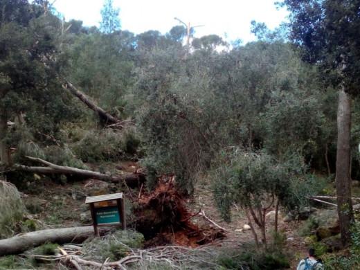 Hasta tres 'caps de fibló' causaron daños en la costa sur de Ciutadella