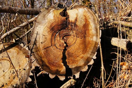 La madera de los árboles caídos se degrada rápido
