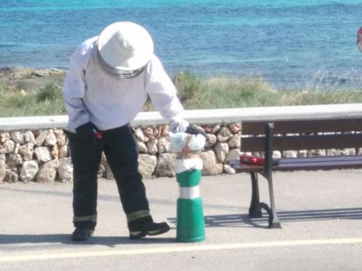 (Galería de fotos) Las avispas pican a varios turistas, incluído niños, en la playa de Punta Prima