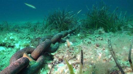 La posidonia es básica para mantener el equilibrio del Mediterráneo.