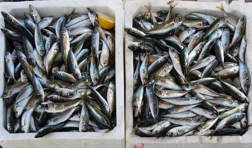 ¿De dónde vendrá el pescado si no hay quien lo pesque?