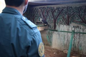 La operación la han llevado a cabo agentes del Servicio de Protección de la Naturaleza (Seprona).