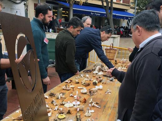 (Galería de fotos) Pasión por las setas en Ferreries
