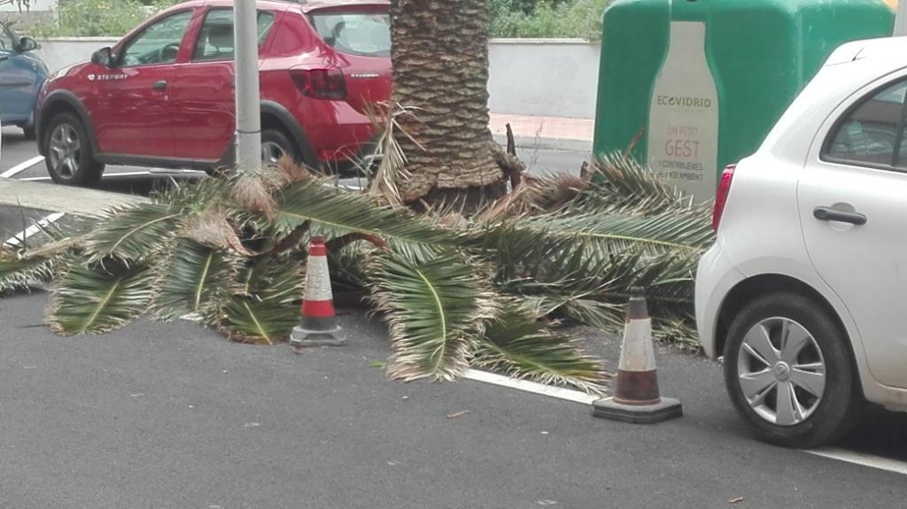 Los restos de palmeras se llevaron a puntos verdes.