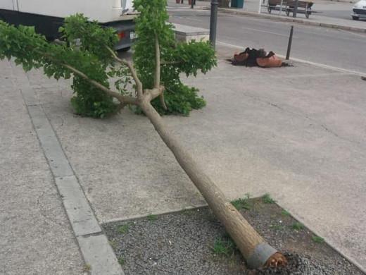 (Fotos) Vandalismo en Maó