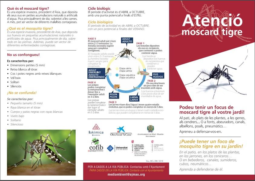 Maó pretende reducir el impacto del mosquito tigre en la ciudad.