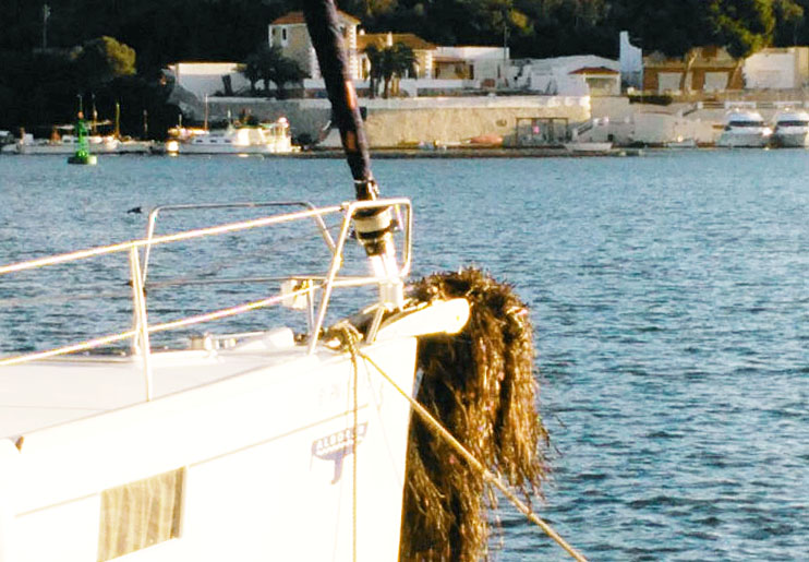 Imagen de la posidonia en la embarcación.