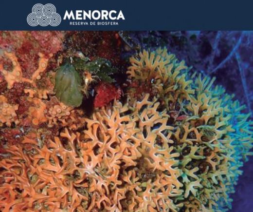 Ciclo de charlas dedicadas al medio marino y la Reserva de Biosfera