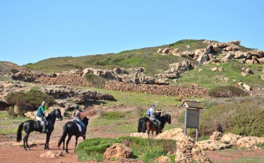 El proyecto SAM quiere velar por el bienestar de los caballos en su retiro