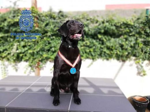 Doky, el perro de la Polcía Nacional de Baleares condecorado