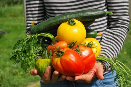Los productores ecológicos quieren notar el soporte de la nueva ley