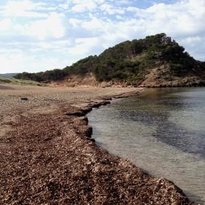 La naturaleza, uno de los argumentos para elegir la Isla. FOTO.- Archivo