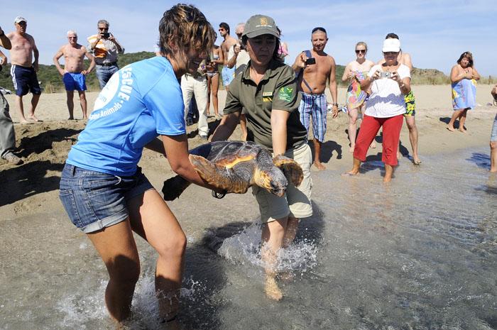 suelta de tortugas en playa sa mesquida