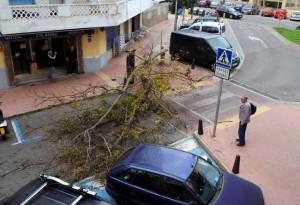 Una de las incidencias, la caída de este árbol en Mahón.