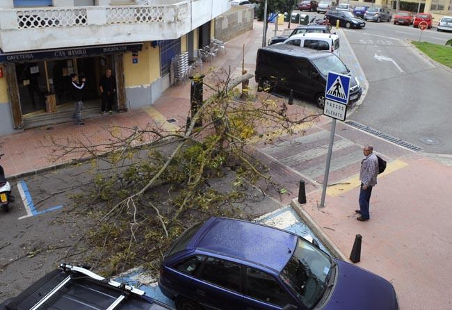 arbol caido por el fuerte viento en la calle san esteban de mao