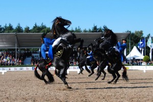 Espectáculo ecuestre con caballos menorquines. Foto: Menorcahorses.