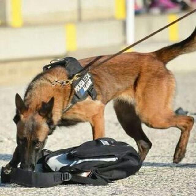 Unidad Canina Alaior 2