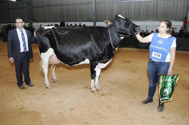 vaca ganadora fira del camp