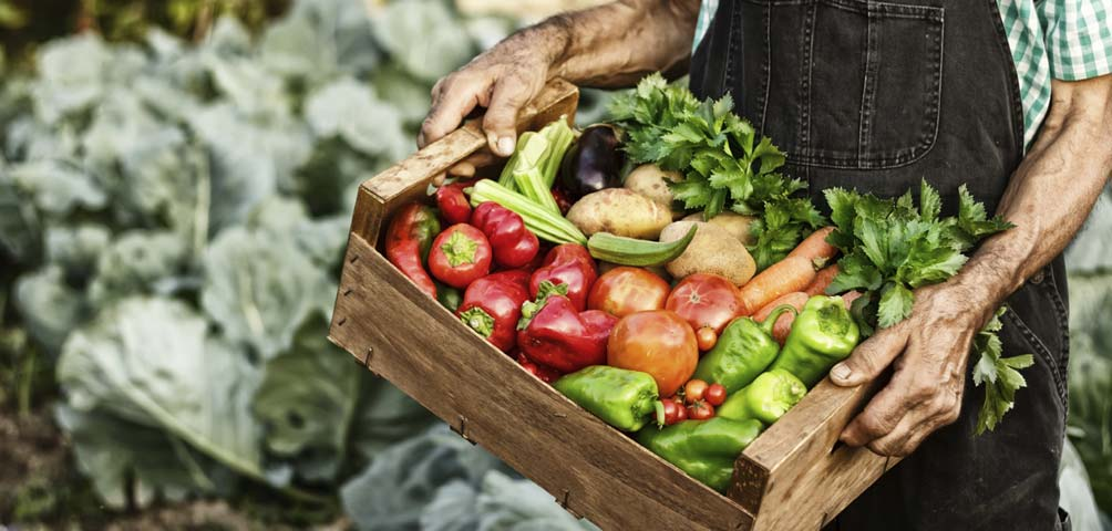 Un 74% de los menorquines apuesta por un modelo que camine hacia la soberanía alimentaria