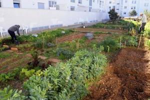 Parcelas ya cultivadas en la zona del Camí de Santa Maria. FOTO.- Archivo