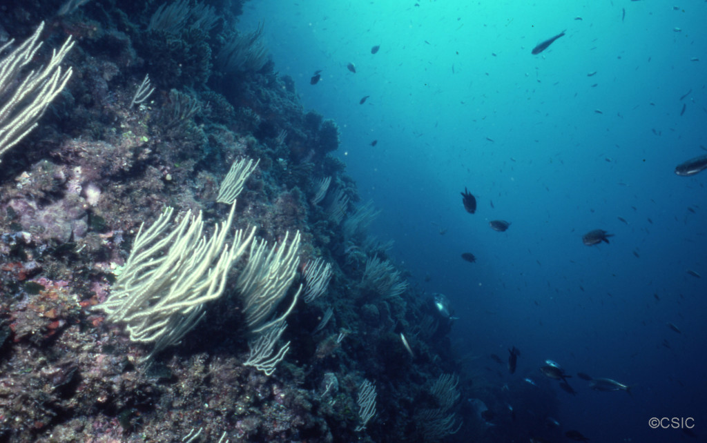Imagen del fondo marino del Canal de Menorca