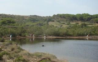 Limpieza en s'Estany de Mongofra Nou. Foto GOB-Menorca
