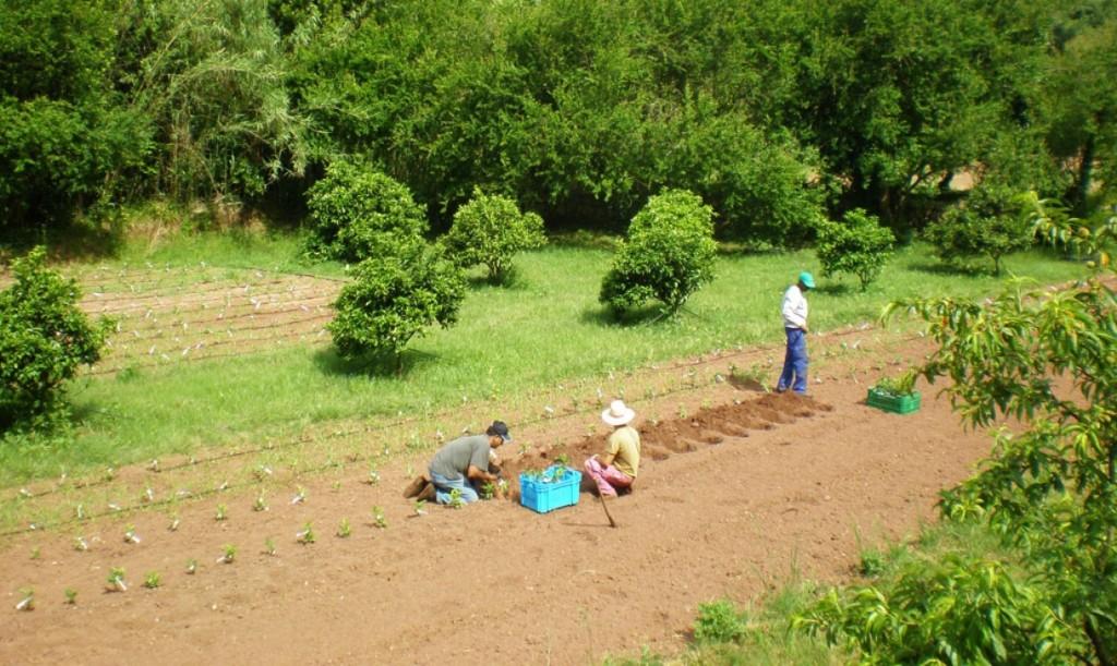 Imagen del proyecto 'Arbres d'Algendar' antes del temporal. Foto: Tomeu Truyol.