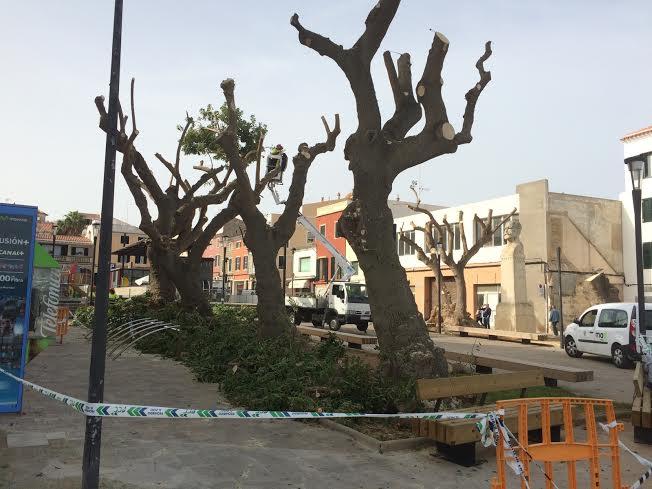 Así han quedado los árboles de la plaza (Fotos: Tolo Mercadal)