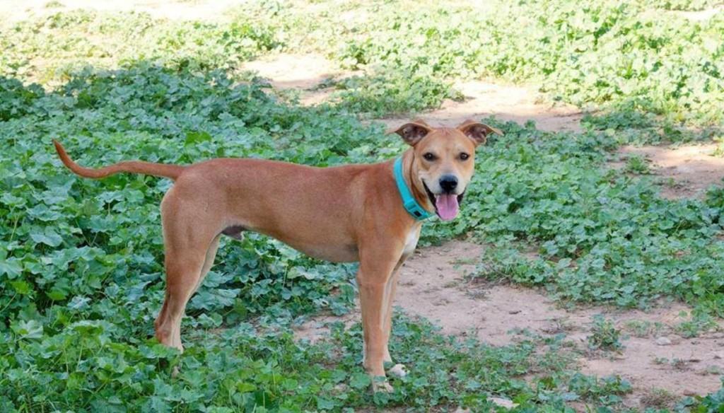 Whisky, uno de los perros que estarán en la pasarela de este domingo. Foto: Protectora d'Animals de Ciutadella.