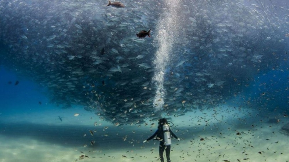 'All the fish in the sea'. Cabo Pulmo (Marine Park, México). Foto: Alex Hester.