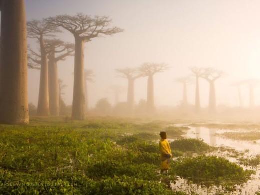 Así son 16 de las mejores fotos 2015 del National Geographic