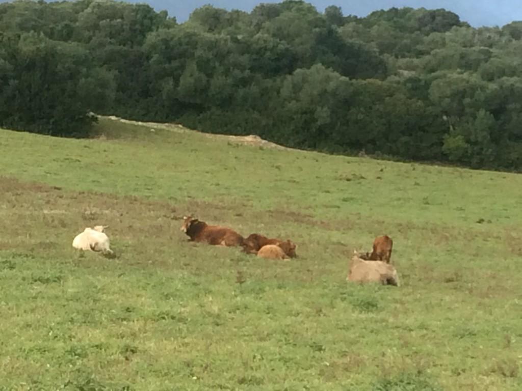 La falta de lluvias no ha procurado la cantidad de forraje necesario para los animales