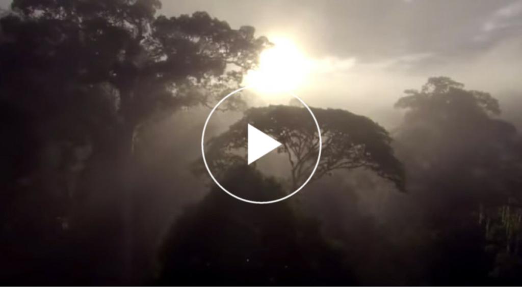 Una de las imágenes del documental 'Corazones verdes frente al cambio climático'.