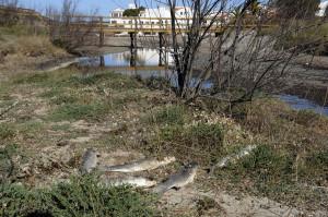 El nivel del agua baja tanto que pone en peligro a especies marinas y otras terrestres y endémicas.