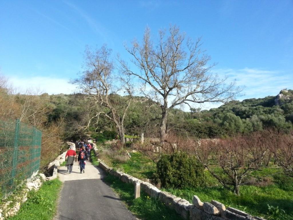 Los 'pacaners' son parecidos a los nogales. Foto: GOB-Menorca.