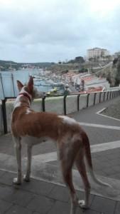 Linda en la actualidad. Foto: Protectora d'Animals de Ciutadella.