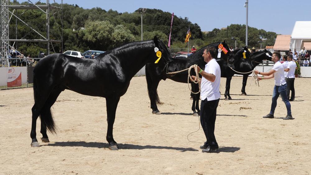 fira del cavall de raa menorquina