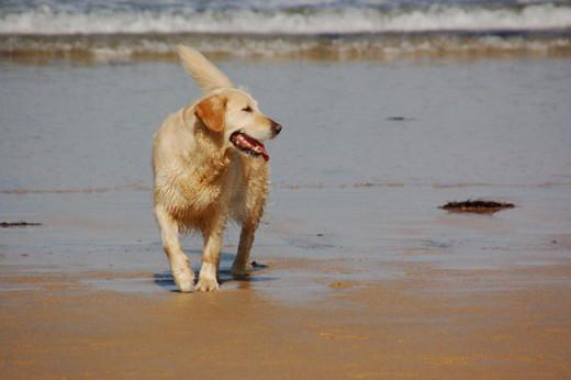 Imagen de un perro en una playa.