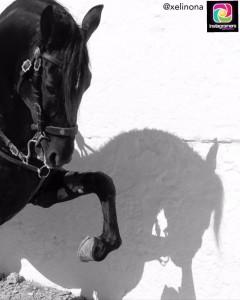 Los caballos y las fiestas patronales de Menorca también triunfan en Instagram (Foto: @Xelinona)
