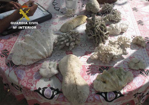 Los corales se usaban como elementos decorativos.