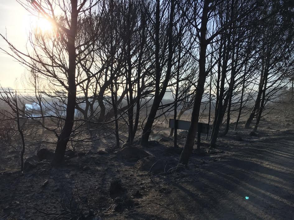 Imagen de una de las zonas devastadas por el fuego (Foto y video, German Sintes.)